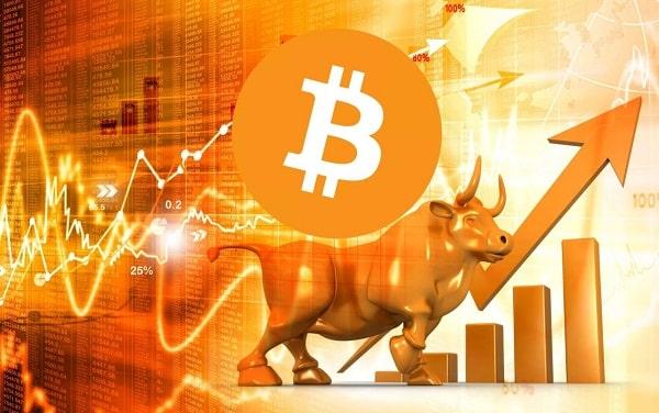 crypto bull market